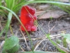 Peter's gummy bear in the ground pic