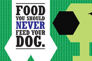 Food you should never feed your dog