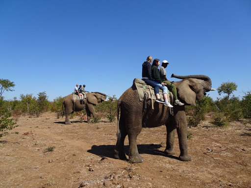 Imagine+going+to+Africa+and+riding+an+elephant+with+people+you+love.+That+was+reality+for+Eden+Nehorai+%28%E2%80%9820%29+who+spent+most+of+her+summer+in+Africa+with+her+family.+%E2%80%9CMy+favorite+place+was+Botswana+and+my+favorite+thing+was+riding+an+elephant+with+my+family+in+Zimbabwe%2C%E2%80%9D+Nehorai+said.