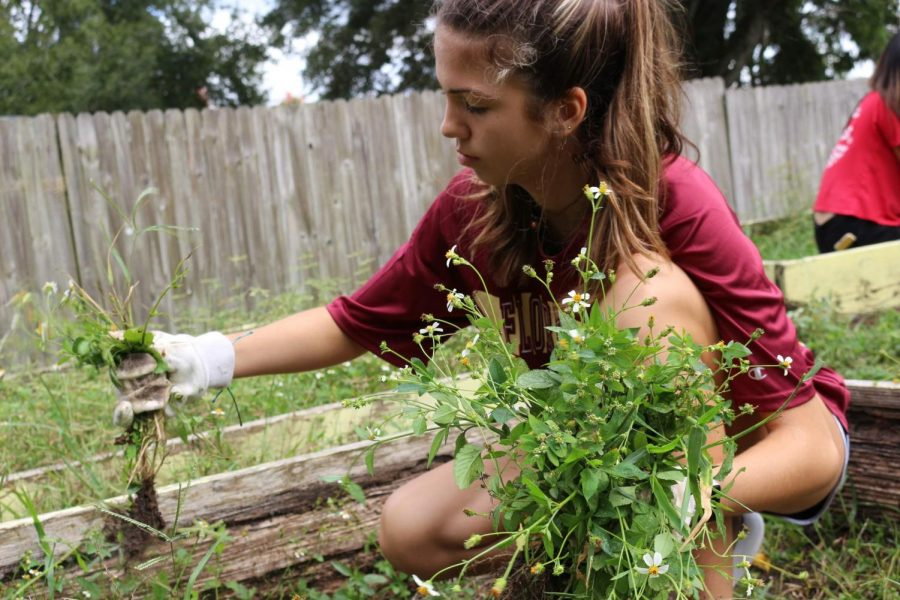 Allyson May ('22) helps weed the community garden at the Habitat ReStore.