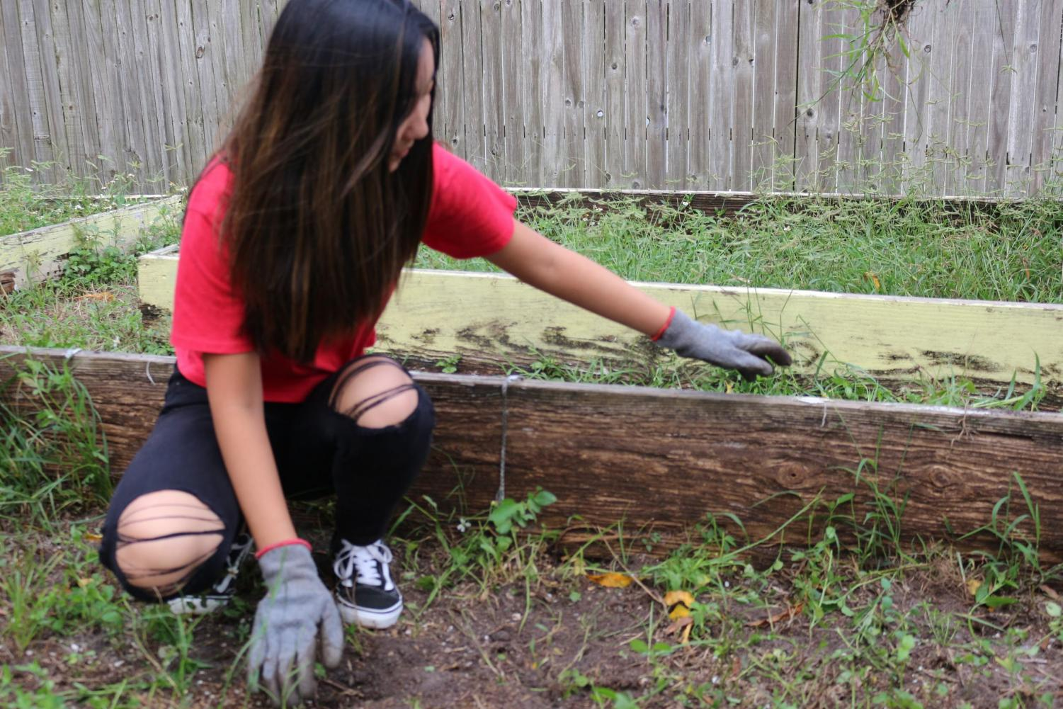 Madison+Brown+%28%2722%29+enjoys+helping+out+in+the+garden.+This+is+her+first+time+volunteering+at+a+Habitat+ReStore.