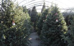 'Tis the season for Christmas trees